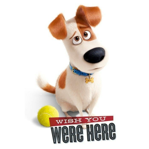 Secret Life of Pets poszter (PP33850)